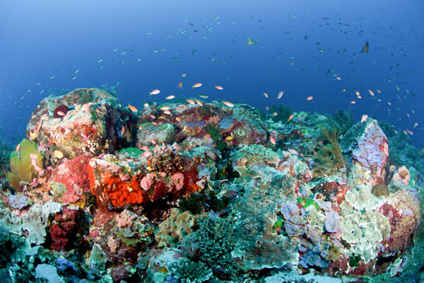 Alor amazing coral