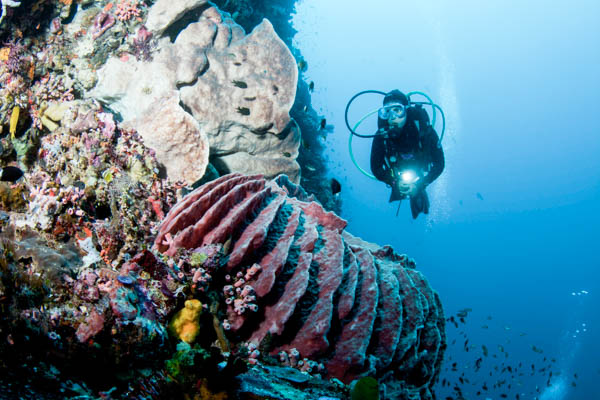 Diving in Alor